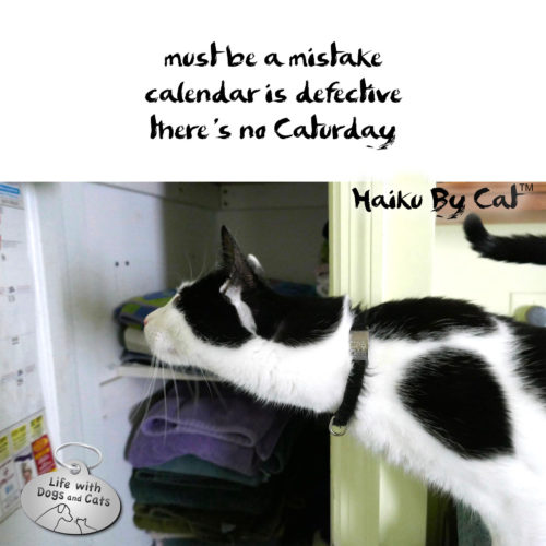 must be a mistake / calendar is defective / there's no caturday #HaikuByCat #MicroPoetry #Haikusday