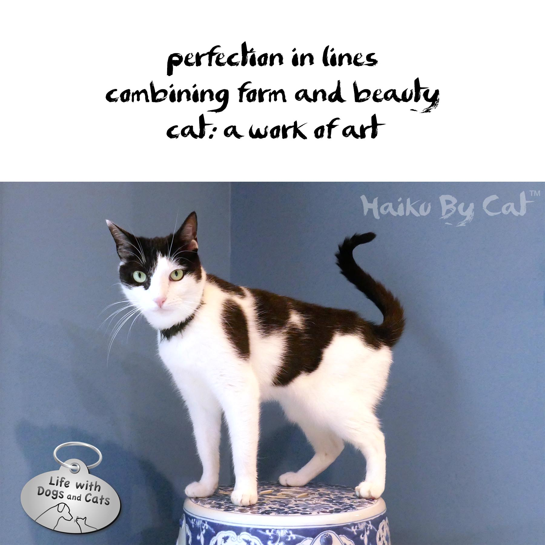 perfection in lines / combining form and beauty / cat: a work of art #HaikuByCat #Haikusday #MicroPoetry