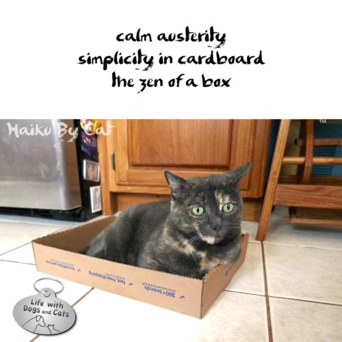 calm austerity / simplicity in cardboard / the zen of a box #HaikuByCat #Haikusday #MicroPoetry