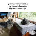 purr-fect moment spoiled / by canine interruption / why do we have dogs? #HaikuByCat #HaikusDay