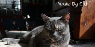 Haiku by Cat: Provide