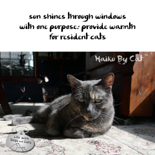 sun shines through windows / with one purpose; provide warmth / for resident cats #HaikuByCat #HaikusDay #MicroPoetry