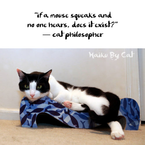 #HaikuByCat if a mouse squeaks and / no one hears, does it exist?