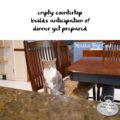 empty countertop / builds anticipation of / dinner yet prepared #HaikuByCat #HaikusDay #MicroPoetry
