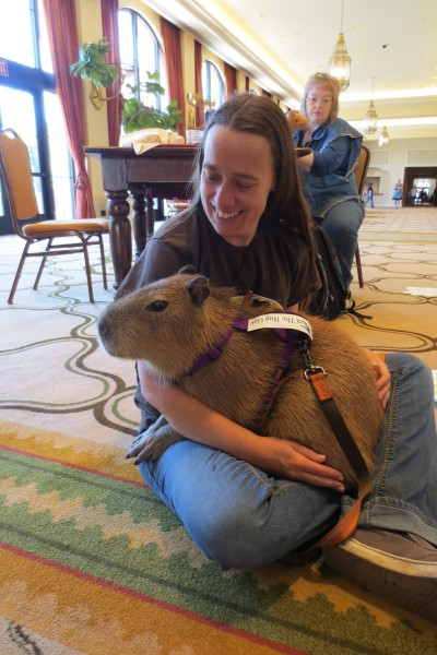 Mia the capybara at BlogPaws
