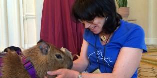 Story: How I met a capybara