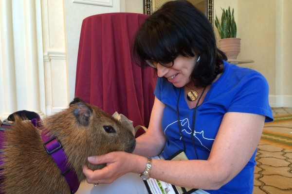Susan C. Willett meets Mia the capybara