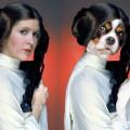 Princess Leia as Cavalier King Charles Spaniel