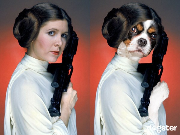 Princess Leia as Cavalier King Charles Spaniel