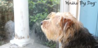 Haiku by Dog: Yearning