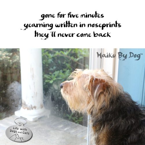 gone for five minutes / yearning written in noseprints / they'll never come back #HaikuByDog #Haikusday #MicroPoetry