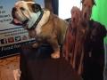flat-pets-green-screen-tillman-blogpaws-2014