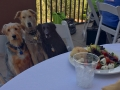 flat-pets-outside-lunch-blogpaws-2014