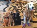 flat-pets-suger-blogpaws-2014