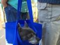 roxy-bag-blogpaws-2014
