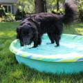 Lilah enjoying the water