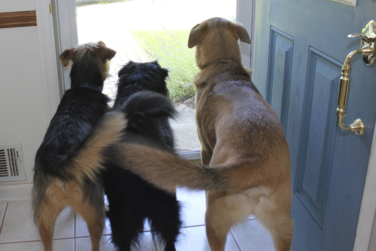 3 dogs, wagging tails