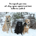 Haiku by Dog: the requests you make sit. stay. ignore squirrel and bird better be worth it