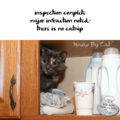 #HaikuByCat inspection complete / major infraction noted / there is no catnip