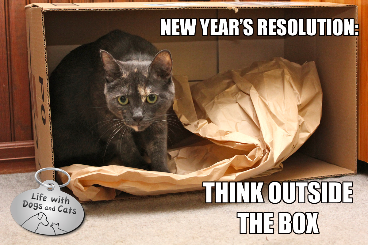 Photos: New Year's Resolutions : Life with Dogs and Cats Funny Cat And Dog Pictures Together