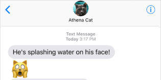 Text from Cat: The Horror