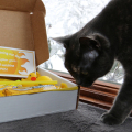 Athena inspects the Box of Sunshine I got from Zappos