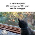 if not for this glass / little sparrow, you'd be lunch / and I'd be happy #HaikuByCat