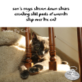 Haiku by Cat: sun's rays stream down stairs / creating still pools of warmth / step over the cat