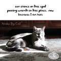Haiku by Cat: sun shines on this spot / pouring warmth in this place, now / because I am here