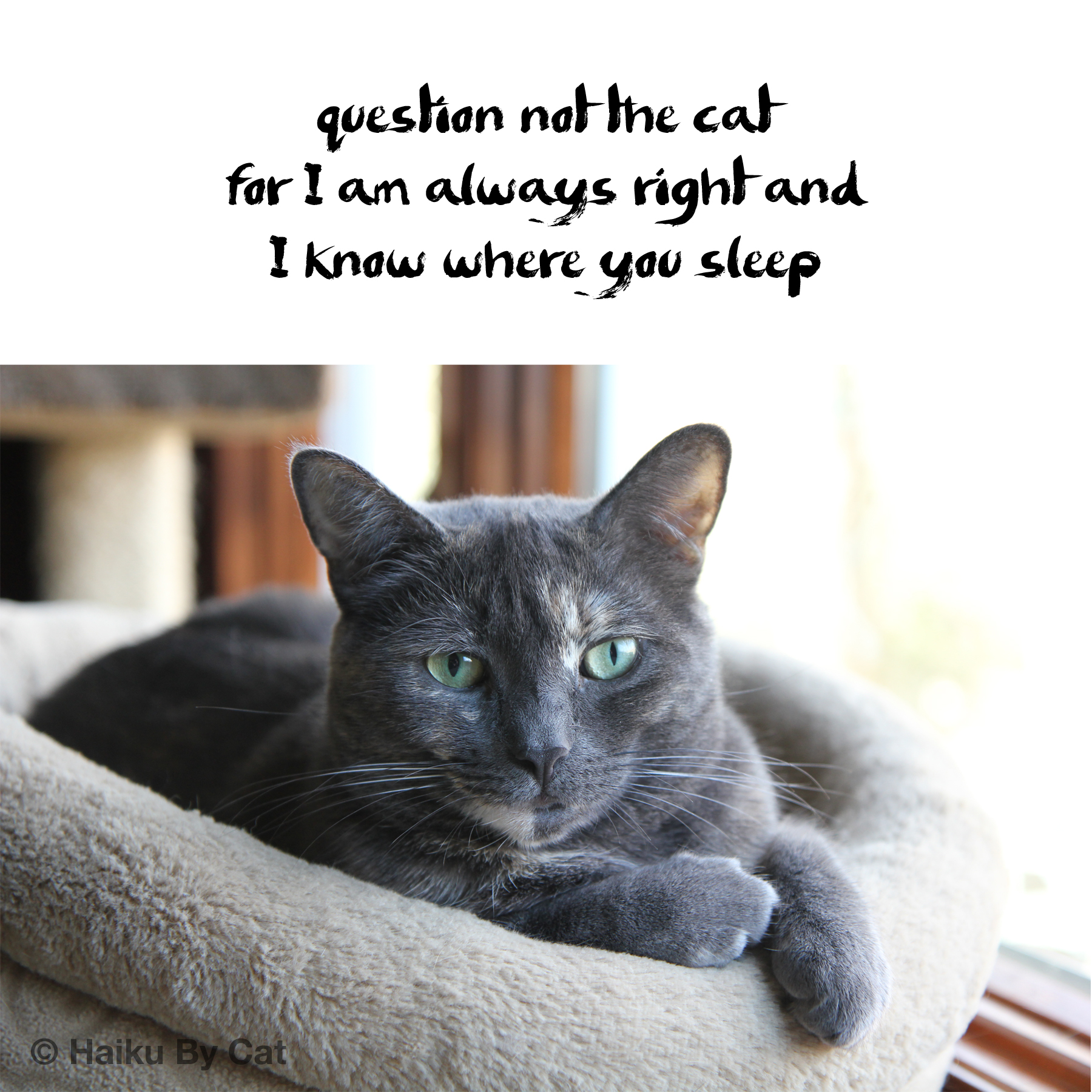 question not the cat / for I am always right and / I know where you sleep
