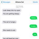 Text from Cat: You will feed the cat