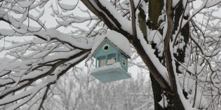 Photo: Bird house in winter