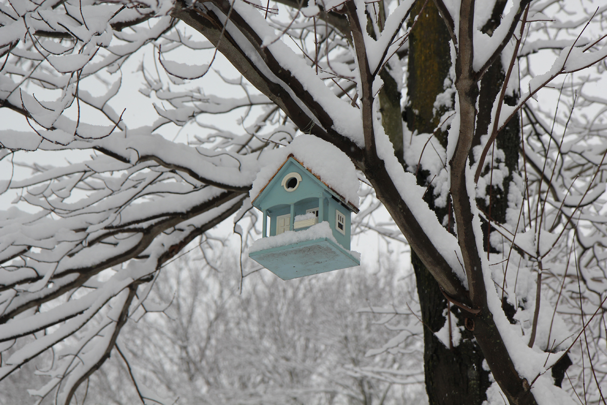 Photo Bird House In Winter Life With Dogs And Cats