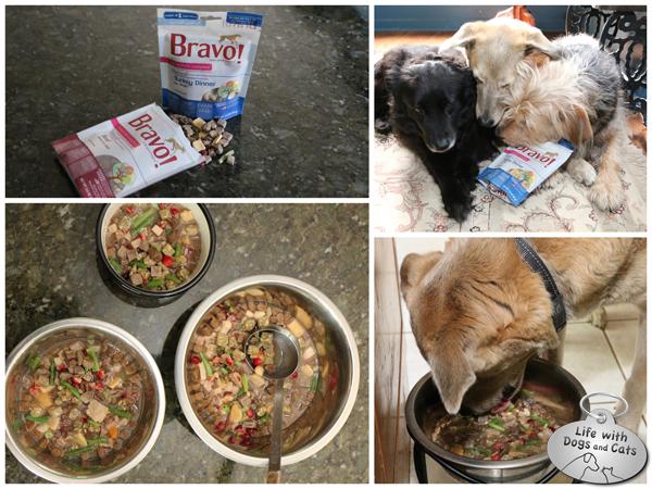 Bravo Dog Food Reviews