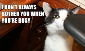 I Don't Always Bother You When You're Busy #MostInterestingCatInTheWorld