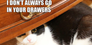 I Don't Always Go In Your Drawers #MostInterestingCatInTheWorld