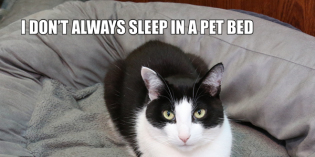 I Don't Always Sleep In A Pet Bed #TheMostInterestingCatInTheWorld
