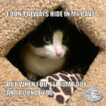 I Don't Always Hide In My Cave But when I do, I'll jump out and pounce you. #TheMostInterestingCatInTheWorld