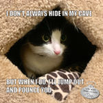 I Don't Always Hide In My Cave #MostInterestingCatInTheWorld