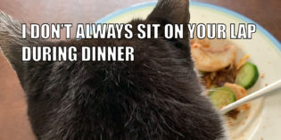 I Don't Always Sit On Your Lap During Dinner #MostInterestingCatInTheWorld
