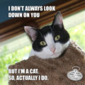 I don't always look down on you But, I'm a cat, so actually, I do. #MostIinterestingCat