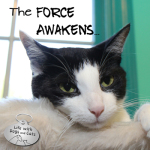 The Force Awakens and it's Not What You Think: Sci Fi Dogs and Cats