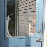 Dogs and Cats: Inside / Outside