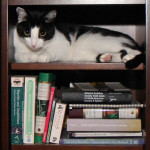 Story: Of cats, boxes and bookcases