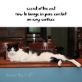 Haiku by Cat: secret of the cat / how to lounge in pure comfort / on any surface