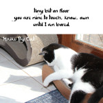 Haiku by Cat: Bit