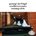 Haiku by Cat: packing? don't forget / essential accessories / including cat fur