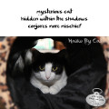 Haiku by Cat: mysterious cat / hidden within the shadows / conjures more mischief
