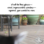 Haiku by Cat: Glass