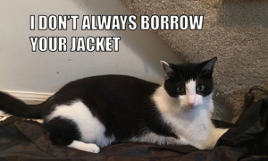 I Don't Always Borrow Your Jacket #MostInterestingCatInTheWorld